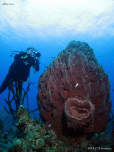 Huge barrel sponge. Canon Ixus 980 &amp; Inon D2000. by Bea &amp; Stef Primatesta 